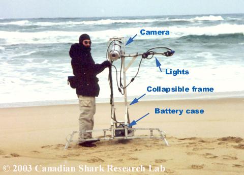 A shark camera