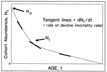 FIG. 13. Theoretical representation of cohort abundance over its lifetime. The three bold tangent lines illustrate the decline in the slope, the absolute mortality rate at time t, as the fish age. In this model, Z (the instantaneous mortality rate) is constant, although this need not be the case.