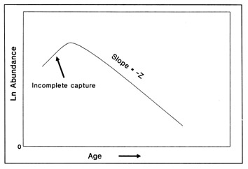 Simplified representation of a catch curve. Estimated abundance is transformed to a logarithm. Incomplete capture of the youngest fish produces an ascending limb on the left-hand side of the graph. The right-hand side alone is used in mortality estimation.