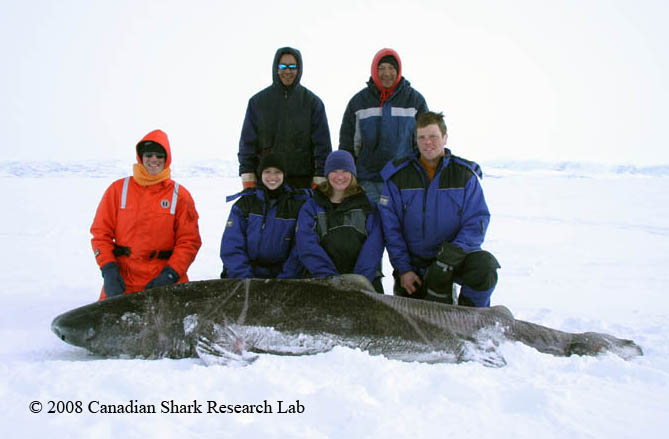 Expedition members pose with a live Greenland shark before releasing it with a satellite tag