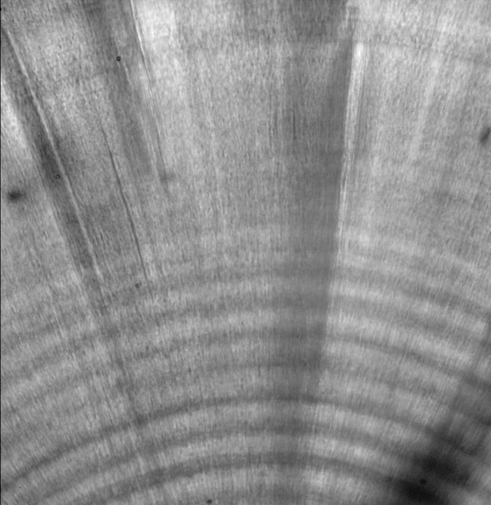 Completely polished otolith at 630x under oil immersion. Although lower magnification may be warranted for otoliths with broad growth increments, use of oil immersion tends to smooth out surface imperfections and improve clarity.